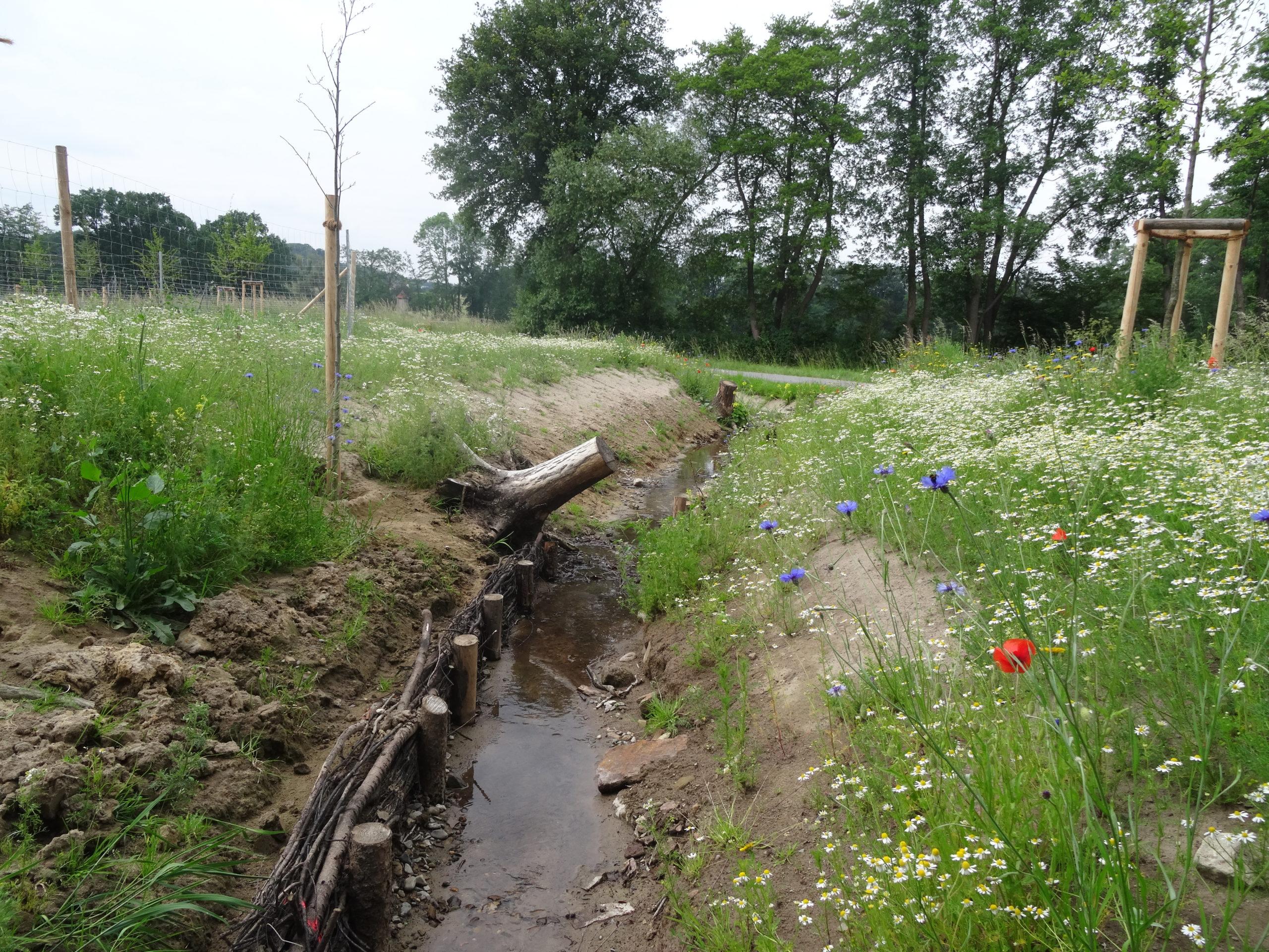 Blick in Fließrichtung des neu gestalteten Gewässerverlaufs. Es wurden vereinzelt Erlen gepflanzt und die Böschungen mit regionalem Saatgut eingesät