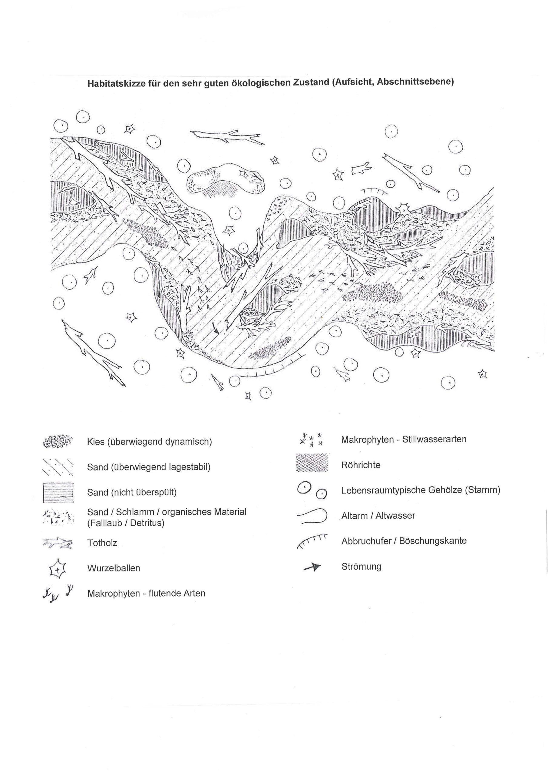 Habitatskizze sandgeprägte Tieflandbäche (Typ14)